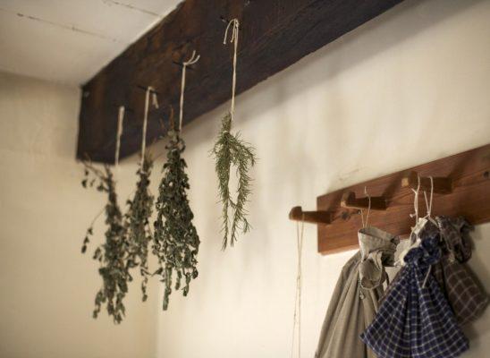 herbs-801819_960_7201